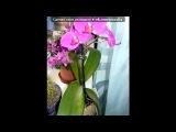 «Орхидеи» под музыку Поль Мориа - Токката. Picrolla